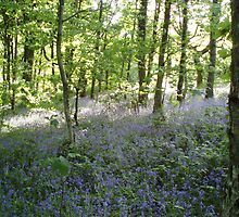 Tyle Coch Bluebells by Neill Parker