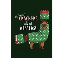 Christmas Crackers About Alpacas! Photographic Print
