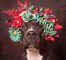 Flower Power, Molly by Sophie Gamand