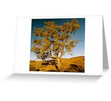 Gum tree Greeting Card