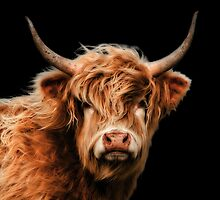 Highland Cow In Colour by Linsey Williams