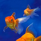Three Goldfish by chipstick