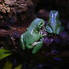 green tree frog by 2HPhotography
