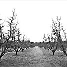 Winter orchard by pennyswork