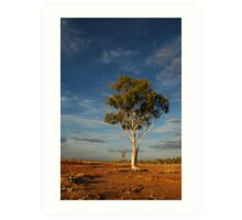 Lone Gum Tree in the Central Australian Outback Art Print