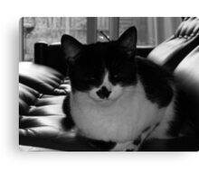 Milly chilling 70s style Canvas Print
