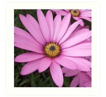 Hot Pink Flower Art Print
