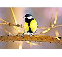 Tit bird on the tree like a watercolor Photographic Print