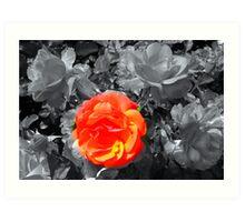 Rose Focal Point  Art Print