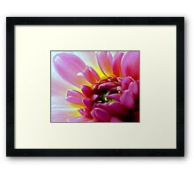 Pink Dahlia of Lovely Color Framed Print