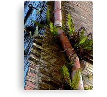 If Your Building Is Grungy, Add a Pink Pipe and Some Nice Plants Canvas Print