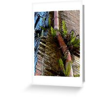 If Your Building Is Grungy, Add a Pink Pipe and Some Nice Plants Greeting Card