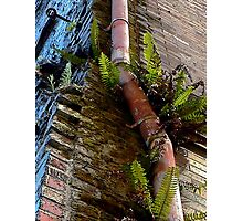 If Your Building Is Grungy, Add a Pink Pipe and Some Nice Plants Photographic Print