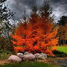 Autumn Splendour!!! by Larry Trupp