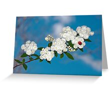 Ladybug on Bridal Wreathe Greeting Card