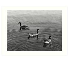 Tres geese Art Print