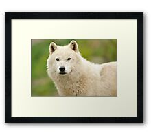 Just a little curious Framed Print