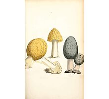 Coloured figures of English fungi or mushrooms James Sowerby 1809 0161 Photographic Print