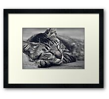 Sleeping Cat - enjoy the dream Framed Print
