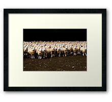 Photo Shooting of 2000 Sheeps Framed Print