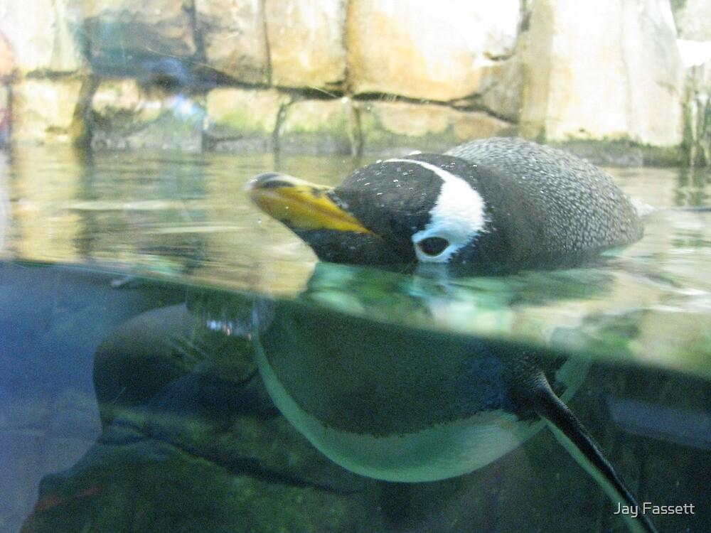 penguin by Jay Fassett