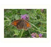 Meadow Brown butterfly Art Print