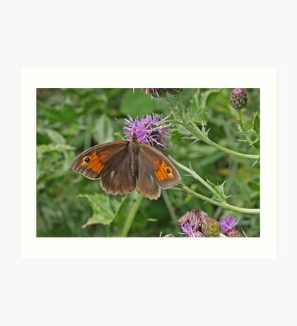 Meadow Brown butterfly Art Print