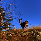 On The Ridge!!! by Larry Trupp