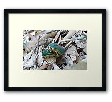 GREEN JUNE BEETLES MATING Framed Print
