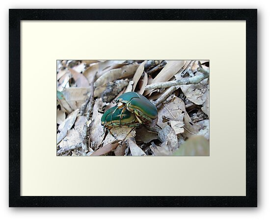 GREEN JUNE BEETLES MATING by May Lattanzio