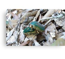 GREEN JUNE BEETLES MATING Canvas Print
