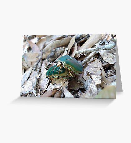 GREEN JUNE BEETLES MATING Greeting Card