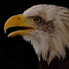american eagle by brett watson