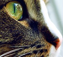 A close up of a cat with green eye by a1luha