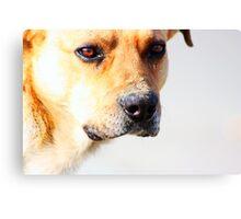 Close up of an beautiful sad yellow dog Canvas Print