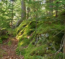 Mossy Maine by Dandelion Dilluvio