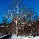 White and Blues by AlGrover