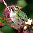 Female Ruby-throated Hummingbird by Larry Trupp