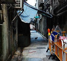 Alleycat by phototraveler