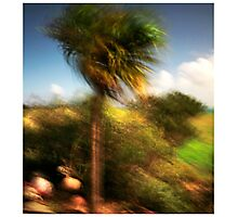 Sun and Storm Photographic Print