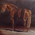 'Gortfree Hero'- Irish Draught Stallion by Pauline Sharp