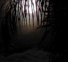 Moon Behind Palm Leaves by Craig Stronner