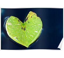Green Heart Shaped Lily Pad on Water Poster