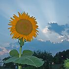radiant sunflower by marianne troia