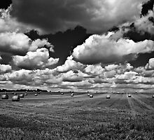 Harvested Hay Field B&W by ArtforARMS