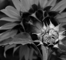 Silver Touch by JHRphotoART