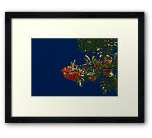 ISO100 Framed Print