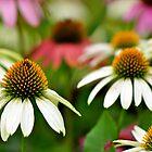 Nana's Garden by Ainsley Kellar Creations