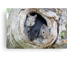 Two's Company / Baby Squirrels Canvas Print