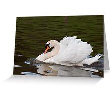 Grumps: Male Mute Swan Greeting Card